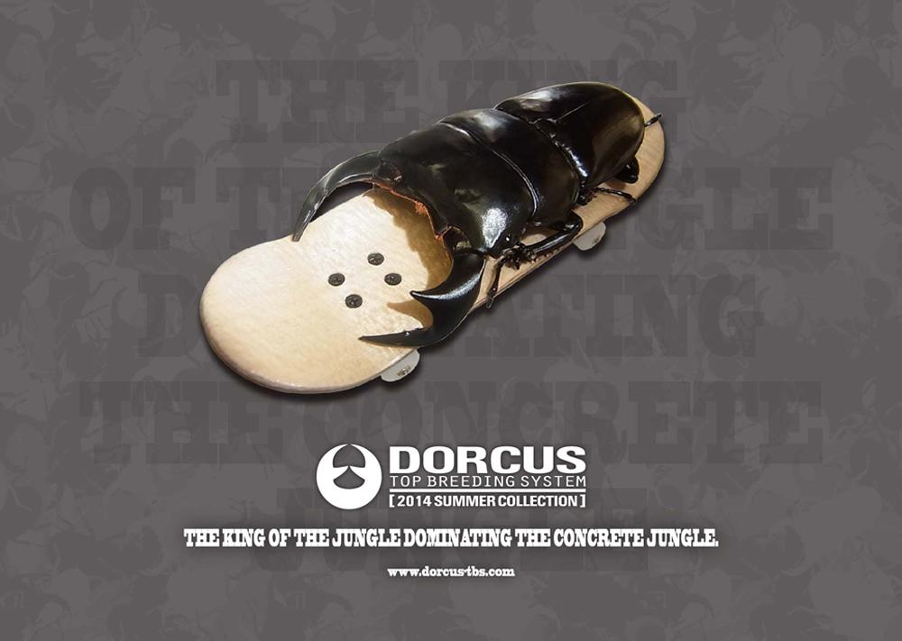 2014dorcus summer0